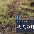 Photos: ハナショウブも咲き始めた