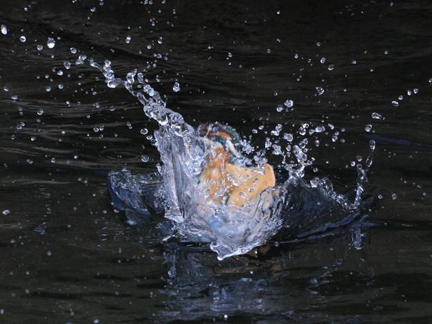 食後の水浴びダイブ