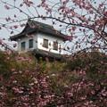Photos: 掛川城