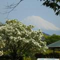 Photos: 富士とコラボ