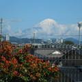 昨日の富士
