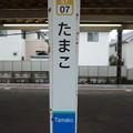 Photos: ST07 たまこ