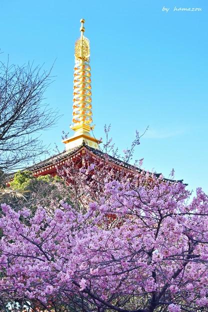 桜咲く~♪