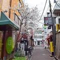 Photos: 路地裏に咲く
