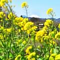 Photos: 春が来た~♪