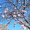 Photos: 花桃の下