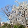 Photos: 春色沿線(45)