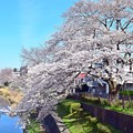 Photos: 春散歩
