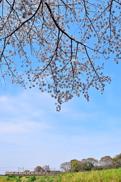 春の青空の下を