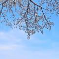 Photos: 春の青空の下を