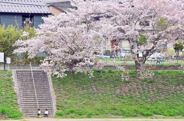 小っちゃな桜人