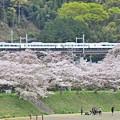 Photos: 春色沿線(47)