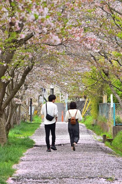 葉桜の二人