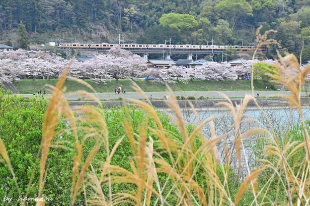 Photos: 春色沿線(51)