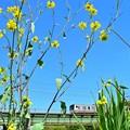 Photos: 春色沿線(52)
