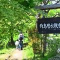 Photos: 向島用水親水路