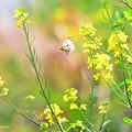 天使舞う春~♪