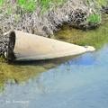 Photos: 土管の上で甲羅干し