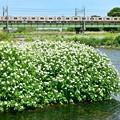 Photos: 春色沿線(54)
