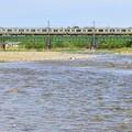 Photos: 浅川を渡る
