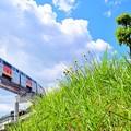 Photos: 新緑香る青空