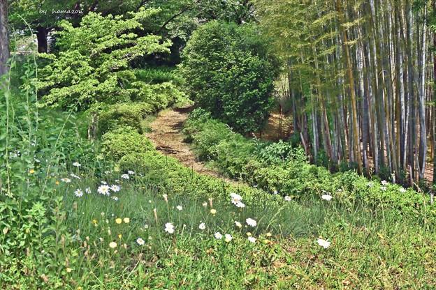Photos: 新緑の小径