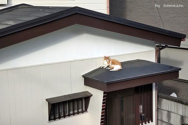 屋根の上(=^・^=)