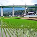 Photos: 里山の水田