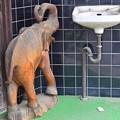 Photos: 水が飲みたい小象