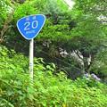 国道20号と紫陽花