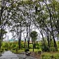 雨降る公園
