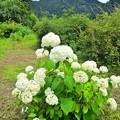 Photos: 里山の白