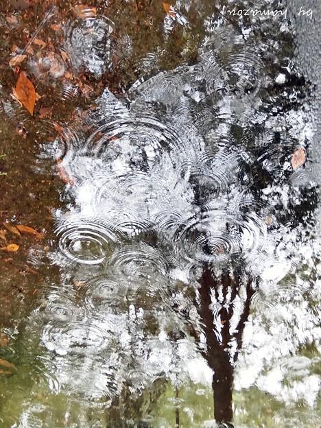 雨垂れの木