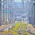 Photos: ★夏色沿線(27)