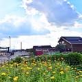 盛夏のワンコ雲(^^ゞ