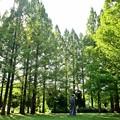 深緑の公園
