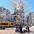 Photos: 春満喫