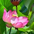 Photos: 咲かせて桃色吐息
