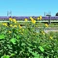 Photos: お座敷列車で満喫