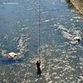 Photos: 釣り吉