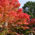 円覚寺入口の紅葉
