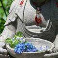 Photos: 花を想って