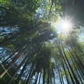 Photos: 明月院の竹林