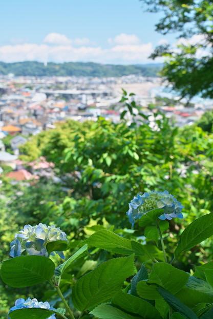 長谷寺から鎌倉方面を望む