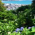 Photos: 長谷寺から由比ヶ浜方面を望む