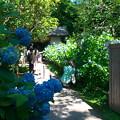 入口から紫陽花いっぱい