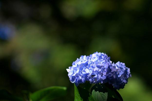 ちょっと紫のもある(^_^;)