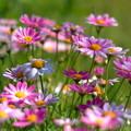 Photos: 憩いの花