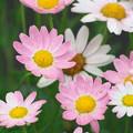 憩いの花をもう一度
