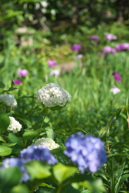 東慶寺6月の庭